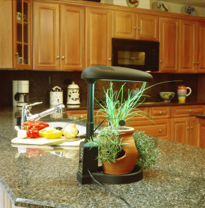 Grow fresh herbs in a kitchen