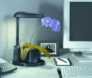 Grow orchids in an office