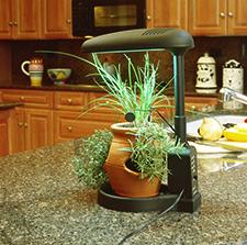 intelligent-plant-light-KITCHEN